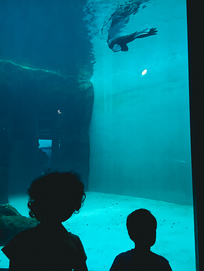 photo of kids gazing at divers in aquarium